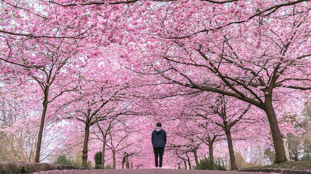 La visite du Père Lachaise au printemps