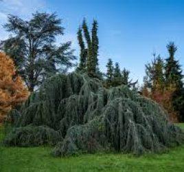 Symbolique et vertus thérapeutiques des arbres de l'Arboretum de Paris